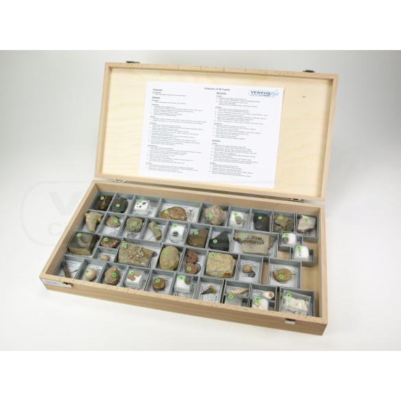 Colección de 40 fósiles