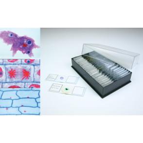 Preparaciones biología general I (25x)