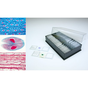 Preparaciones biología general II (50x)