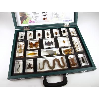 Colección bioplásticos reino animal