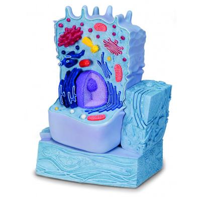 Modelo de célula animal