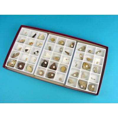 Colección de 45 fósiles