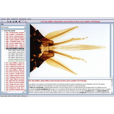 CD: Microscopía biología general II