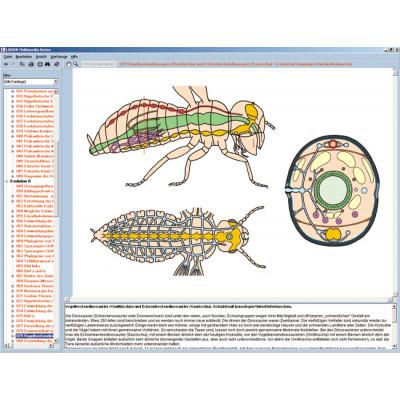 CD: El mundo de los insectos