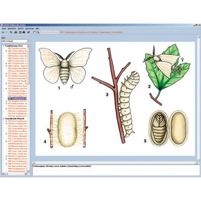 CD: El mundo de las mariposas